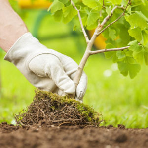 tree and shrub care in kansas